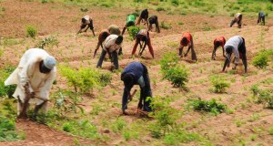NCPC to Hold Joint Farmers Conference in 2018