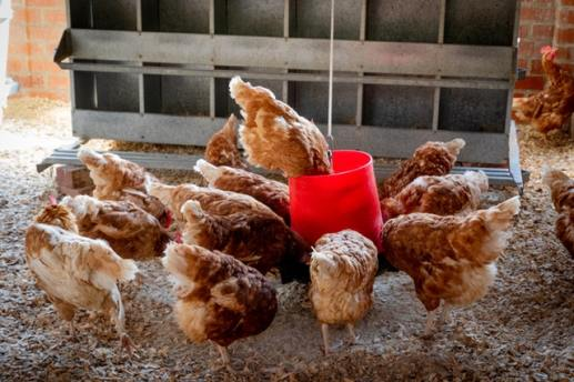 Live stock farming