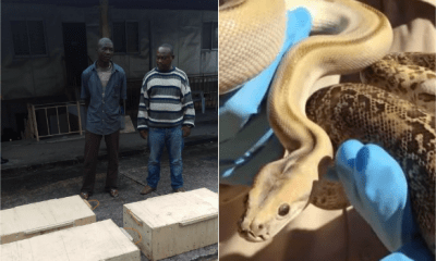 Snake Smugglers