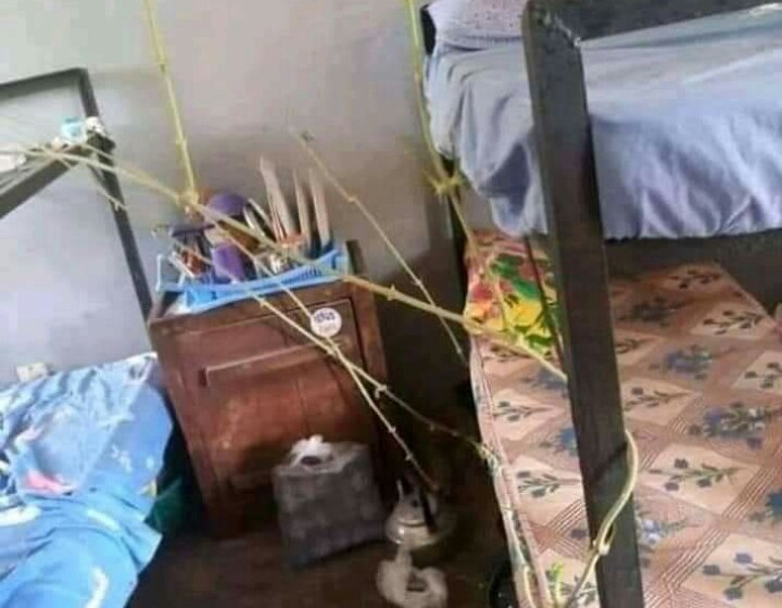 Yam Germinates In UNICAL Male Hostel While On Lockdown (Photos)