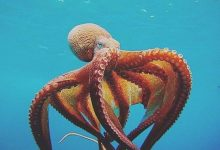 Photo of 7 Interesting Facts About Octopus You Must Know