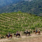 A Northern California Wine Country Underdog Is Working Its Way Back Into the Spotlight