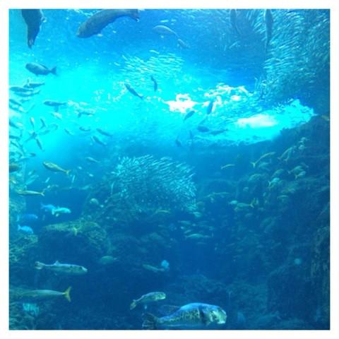 ネイリストの求人情報 東京 水族館
