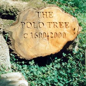 Polo oak seat in Towerhouse Wood