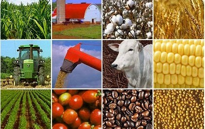 Africa Needs to Face Reality of Low Commodity Prices, IMF Warns