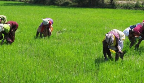 BoA  Is seeking More Funding And Repositioning of Agric Sector