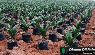 Okomu Oil Doubles Profits YoY