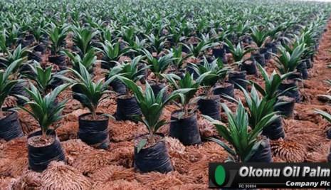 ALERT: Okomu Oil reports N7.8 billion pre-tax profit (2017 HY)