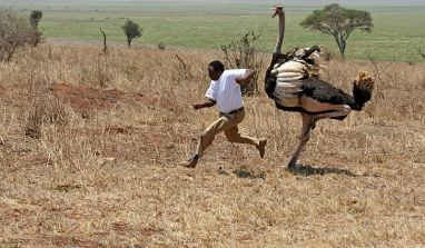 Is NAICOM Playing The Ostrich