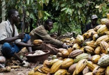 cocoa, FG moves to reposition Nigerian cocoa industry to benefit from global $67b cocoa market