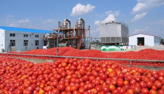 Tomato processing in Nigeria