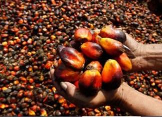 Presco Plc, Okomu Oil, Unilever, PZ Cussons