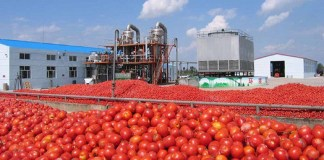 Dangote Tomato,
