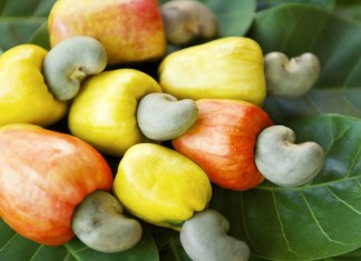 Nigeria's cashew nuts exports fall by 74%