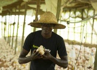 Farmcrowdy, Poultry Farm