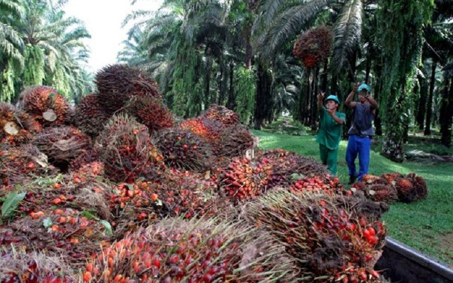Okomu Oil Palm Company Plc declares N3 dividend for FY 2018