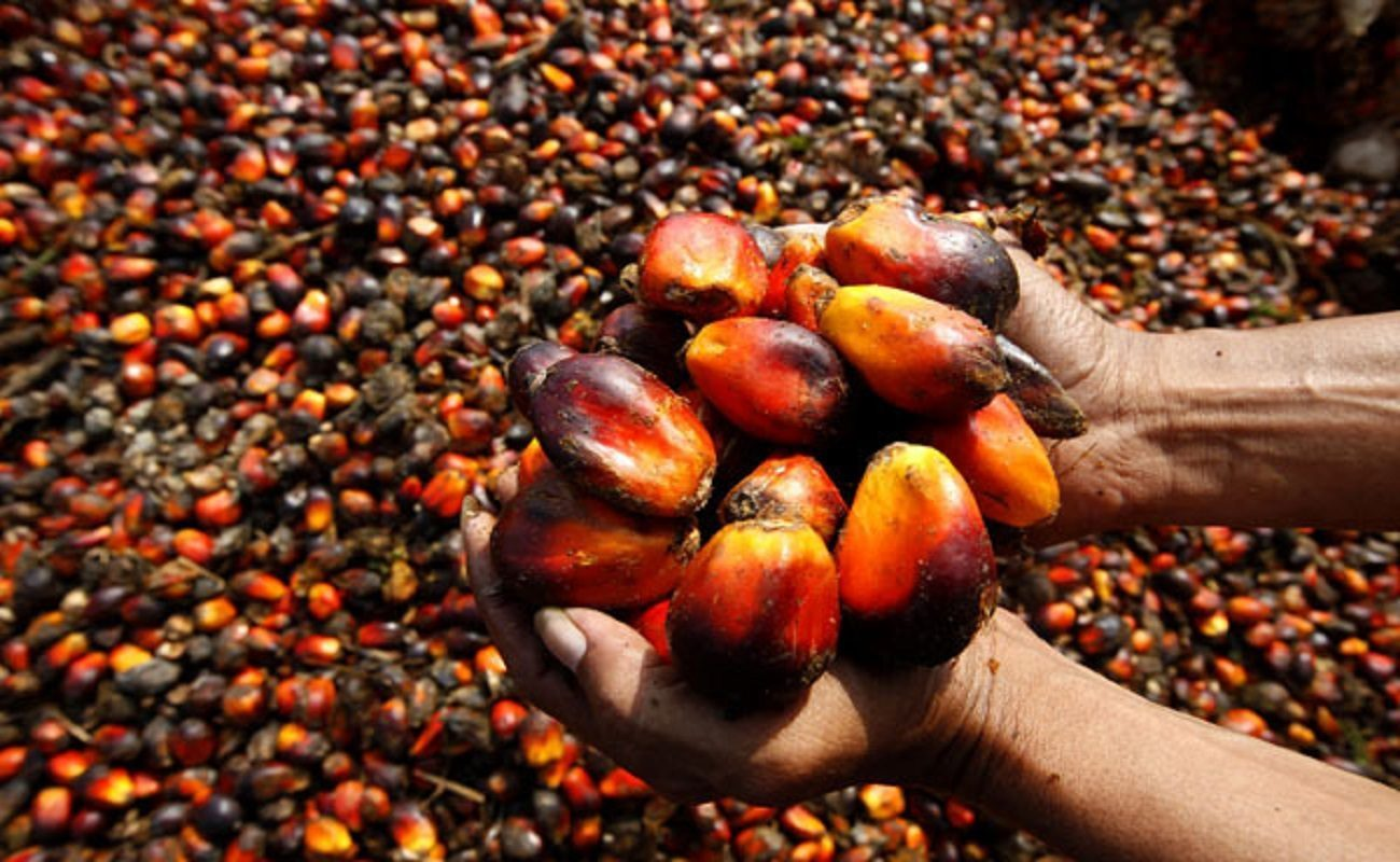 Image result for Nigeria's Oil Palm Production To Generate 4 Million Jobs