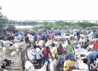 Rams sell as low as N21,000 in major markets as sellers witness mixed turnouts