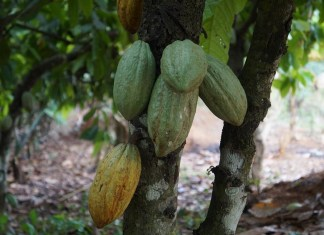 Nigeria earns over N103 billion Naira from cocoa export in 2018