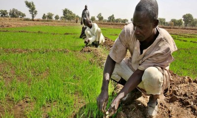 The National Information Technology Development Agency has kick-started a job and wealth creation programme where 130 farmers will each receiv, e seed funding of N100,000Border Closure: Nigerian rice farmers are struggling to feed a rice-hungry nation. CBN to give Niger Delta rice farmers single-digit loan