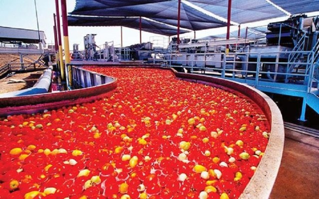 Dangote tomato company to resume production