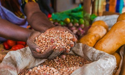 Nigeria's food security, GDP growth hinge on financial inclusion of farmers