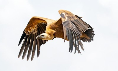 Vultures in flight, Should Nigeria consider suspension of sovereign debt payments like Argentina?