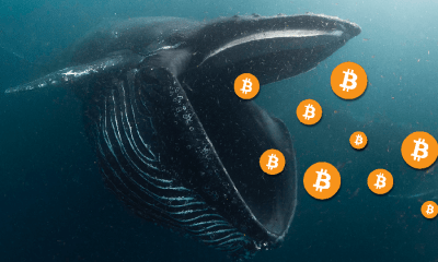 BTC whale steps in to buy larger stacks of Bitcoin, at a discount of $8,850