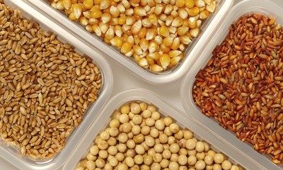 Price of grains drop globally in Futures Market