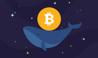 cryptocurrency, Bitcoin whale transfers $104 million worth of cryptos
