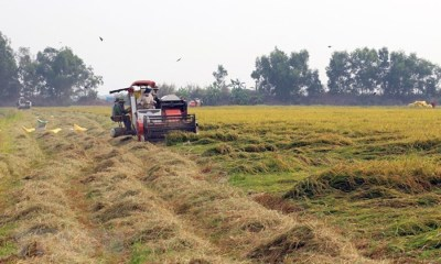 Rice farmers in Delta State call on govt to reduce the cost of hiring tractors