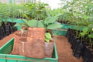 Seedlings in Plastic Bags