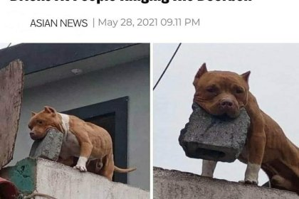man arrested for training dog to throw bricks