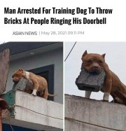 A Man has Been Arrested for Training his Dog to Throw Bricks at People