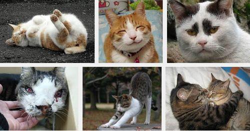 【性格診断】選ぶネコで性格がわかる!あなたがパートナーにしたいのはどのネコですか?