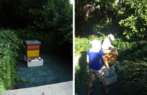 Panj v opuščenem bazenu v Rožni dolini in skupno delo s čebeljo družino