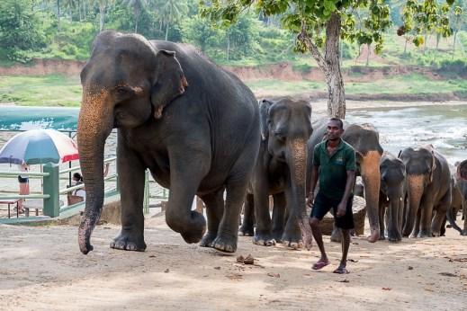 Sri Lanka, jesień 2016