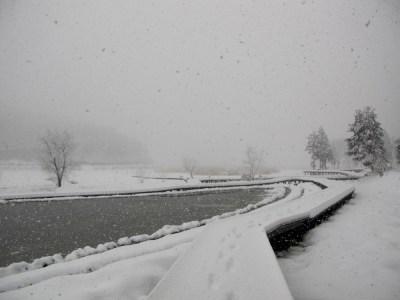 3月のぼたん雪