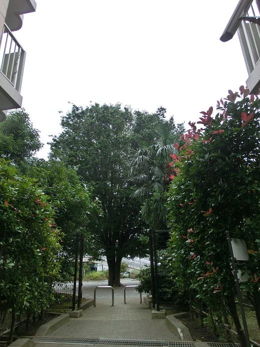 コープ野村厚木愛甲隣接宮前公園の大きな大きな気になる樹