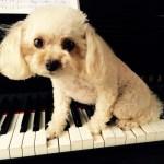 ドイツの音楽教室〜ピアノ指導(初級者)〜