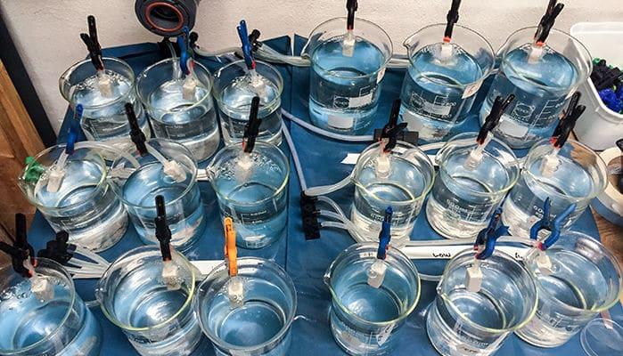 Семеро «жестоких вредителей» спасли морских рыб от уважаемого автора 250 научных работ