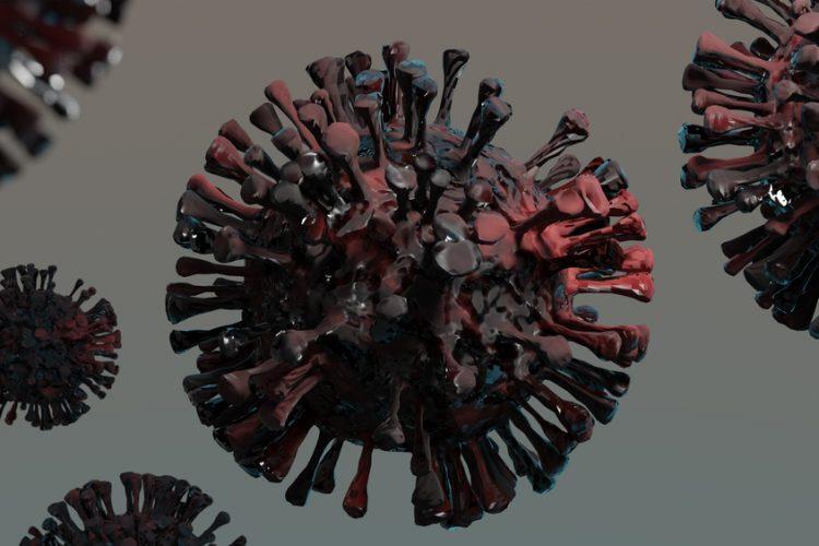 Коронавирус SARS-CoV-2 назвали «в высшей степени адаптированным» именно к человеку