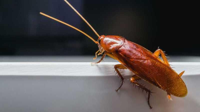 Инженеры создали робота-таракана, которого невозможно раздавить