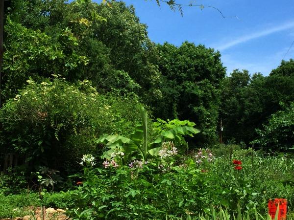 east wind community gardens