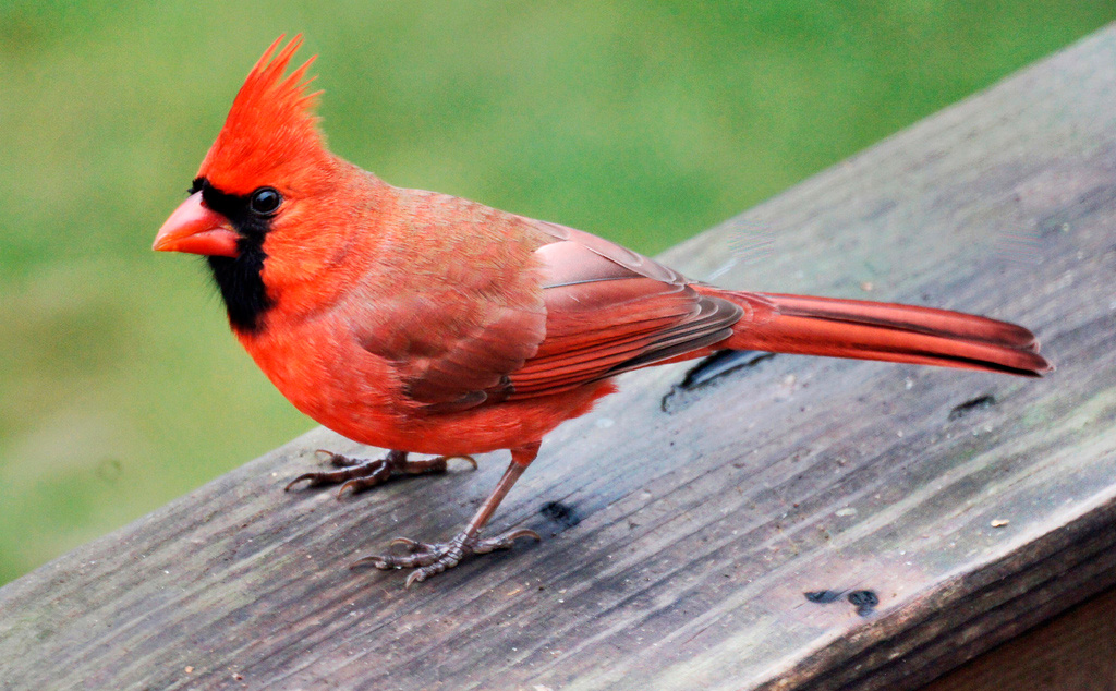 Cardinal Time-Travel…