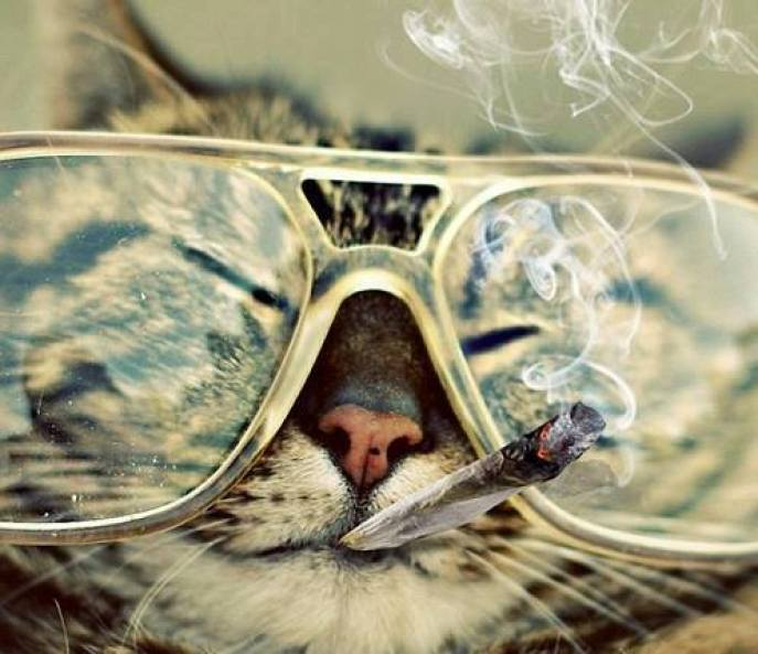 are-you-getting-high-right-meow-kittyjoint