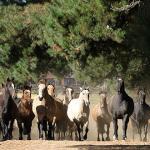 Quanto valem os cavalos?