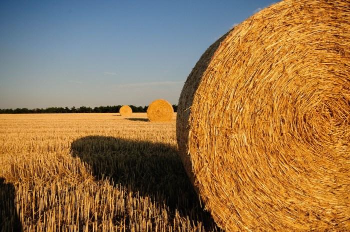 straw-bales-726977_1280