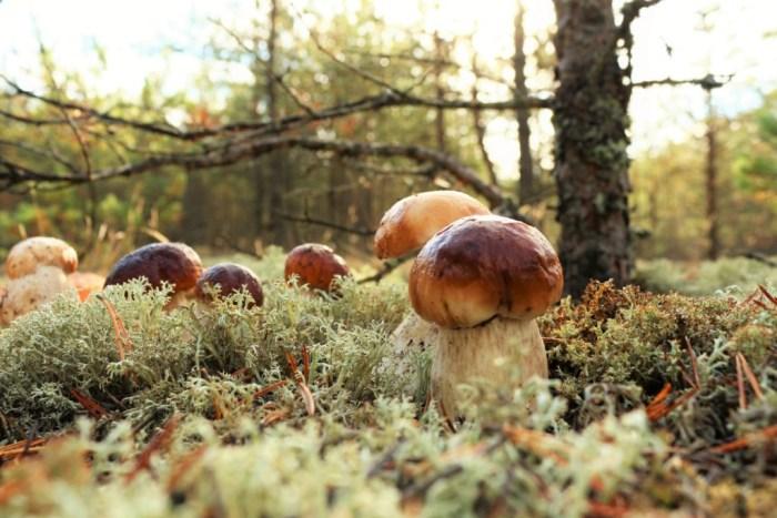 litwa swieto grzybow 10 powodów, by odwiedzić Litwę jesienią