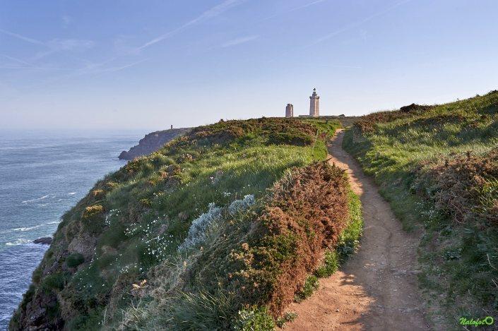 nature bretonne - La lande du Cap Fréhel sur le GR 34, un matin de printemps